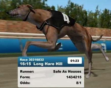 Greyhounds1