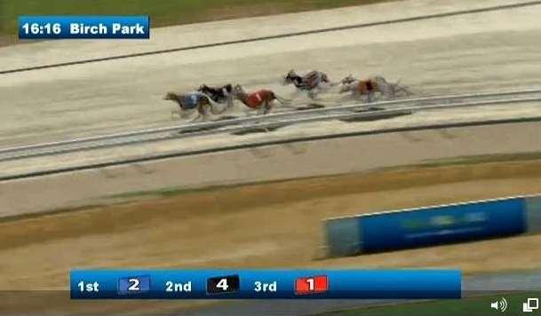 Greyhounds Hurdles3